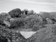 Black and White Image of rocks and bushes