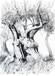 Detailed pencil sketch of a tree