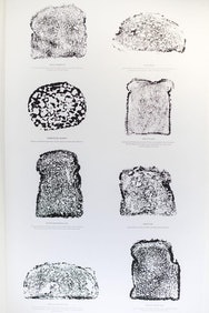 Images of pieces of bread