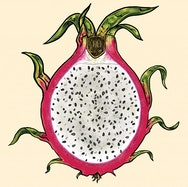 Illustration of a dragon fruit slice