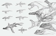 Several concept drawings of a dragon