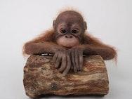 Emily's model monkey
