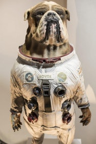 Model of a dog in a space suit