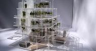 clear acrylic model with plants in