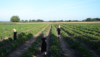People in black clothes wearing baskets on their heads walking in a crop field